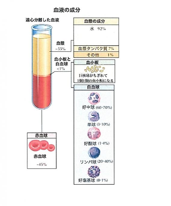 血液成分表