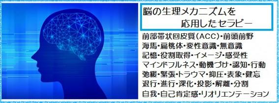脳の生理メカニズム